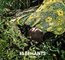 The Elephants. Colors. /подарункове, eco-pack/.